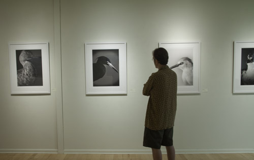 gallery exhibit
